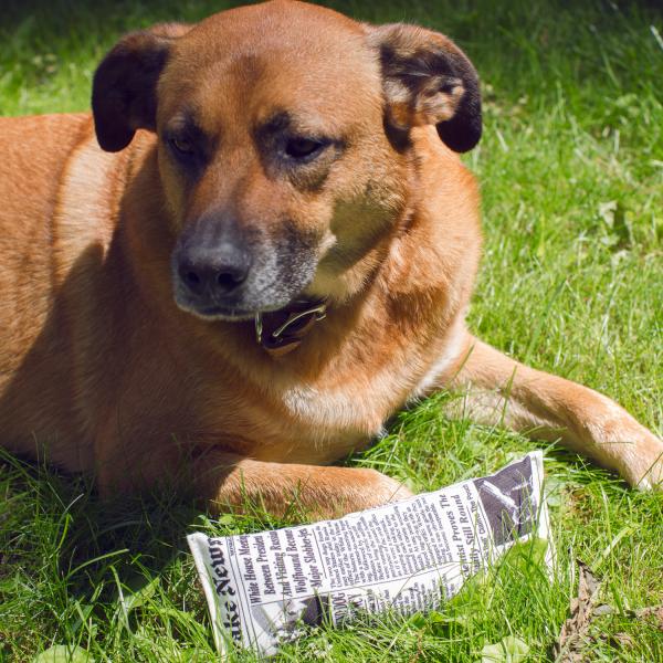 Fake News Krant Hondenspeeltje - Kikkerland